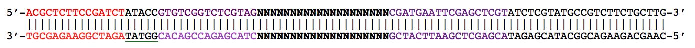 DNTAG_PCR